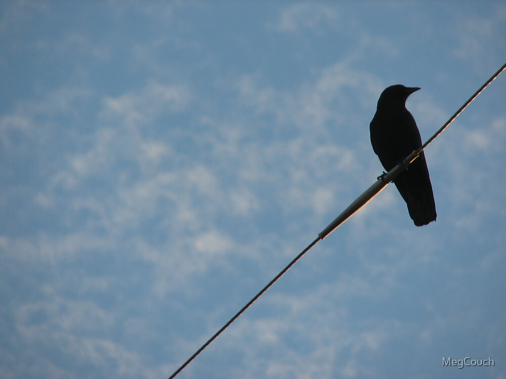 Bird on a wire. by MegCouch