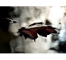 LiquidLight Photographic Print