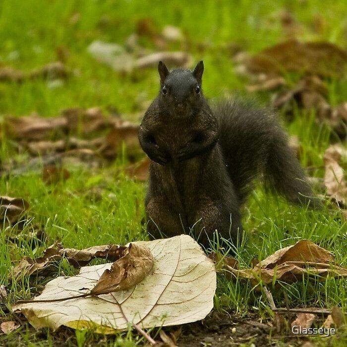 Got any Nuts? by Glasseye
