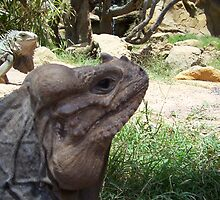 big lizards in lanzarote by jamie fletcher