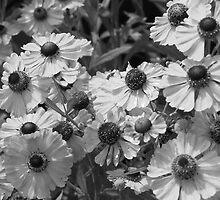 Flowers In Black & White by Gene Cyr