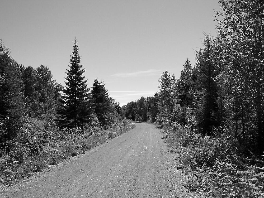 Summer Trail by Gene Cyr