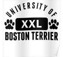 University Of Boston Terrier Poster
