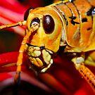 Grasshopper by Terry Best