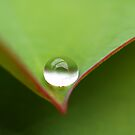 Droplet Clear by tapperboy
