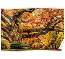 Colorful Old Oak Tree Poster