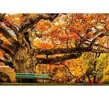 Colorful Old Oak Tree Photographic Print