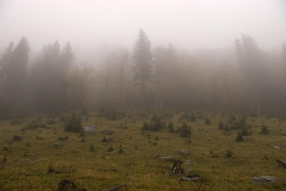 Foggy forest by ictin