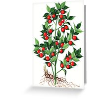 Butcher's Broom - Ruscus aculeatus Greeting Card