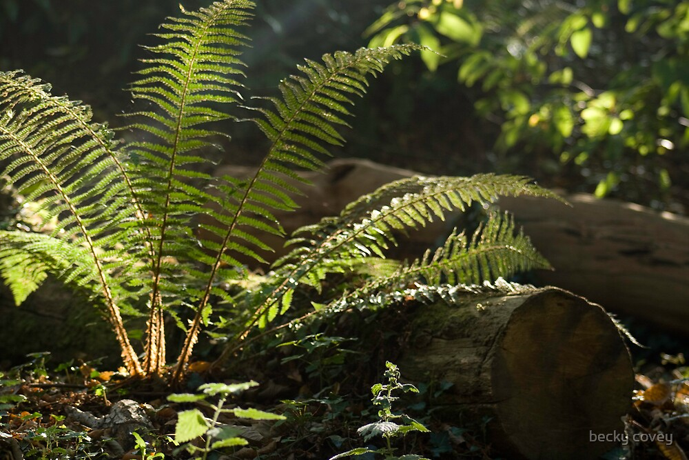 fern by becky covey