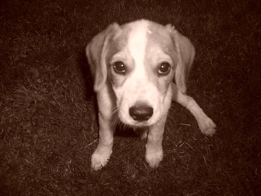 puppy  by Rebekah