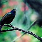 Grackle by sara montour