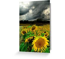 August Rains Greeting Card