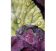 Dew Photographic Print
