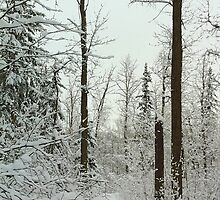Winter Forest by ThoughtBox