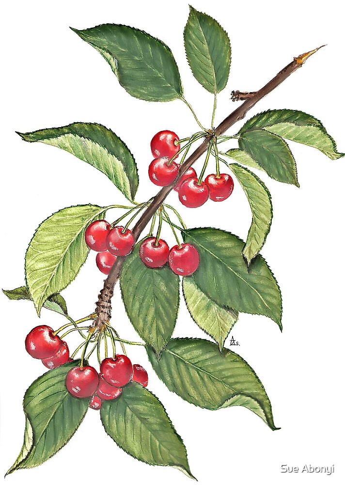 Cherry branch by Sue Abonyi