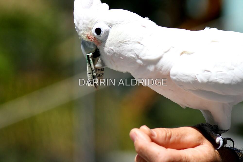 Cash Loving Cockatiel by DARRIN ALDRIDGE