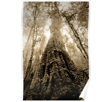 Old Growth Mountain Ash Poster