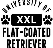 University Of Flat-Coated Retriever by kwg2200