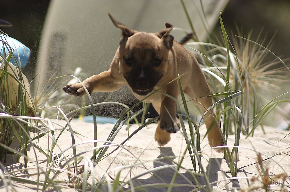 Flying Puppy by foto