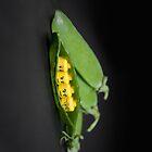 Lego peas in a pod by Kevin  Poulton - aka 'Sad Old Biker'