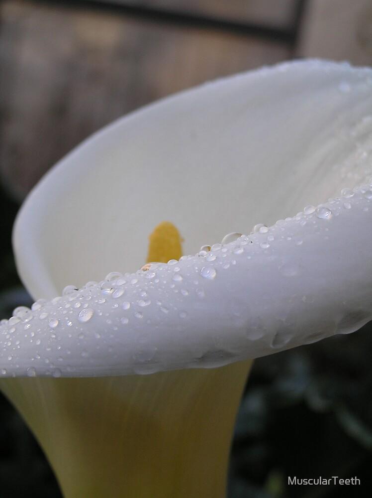 Dew on Flower by MuscularTeeth