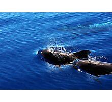 Pilot Whales Photographic Print