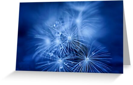 Tiny Fireworks by ╰⊰✿Sue✿⊱╮ Nueckel