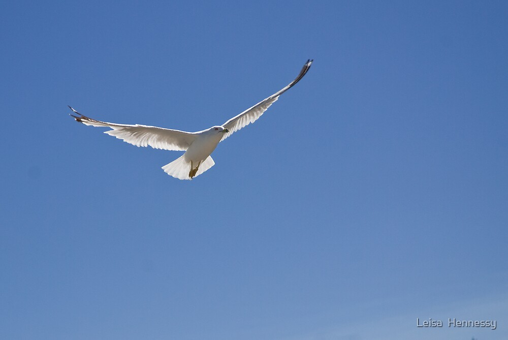 Herring Gull  by Leisa  Hennessy