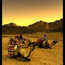 Sunset in Egypt HDR by cienki7