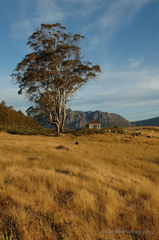 On the farm at Mt Roland by AdrenalinPhotography