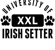 University Of Irish Setter by kwg2200