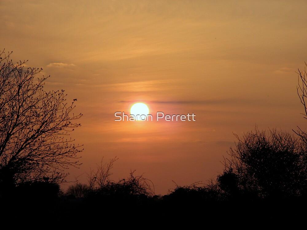 Golden Glow by Sharon Perrett