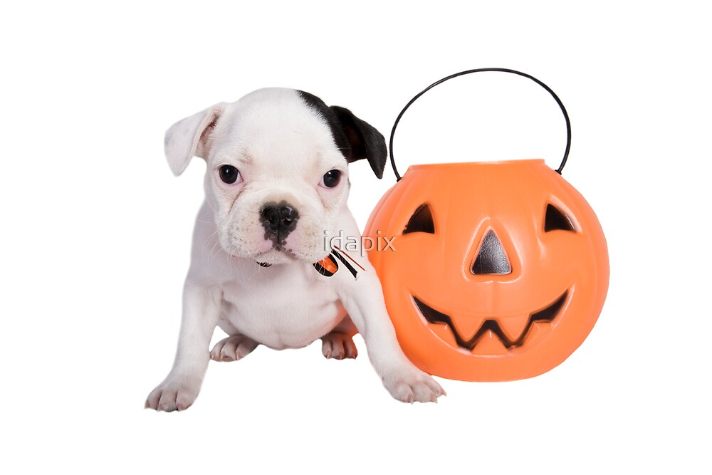Halloween Bulldog by idapix