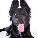 Funny Black Dog by idapix