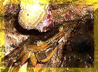 Yellow Geraldton by Gozza