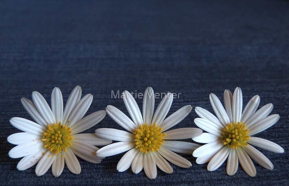 Denim and Daisies 1 by Martie Venter