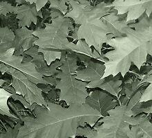 Green Leaf by Gene Cyr