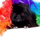 Pekingese Under Rainbow Feathers by idapix
