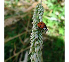 I will jump, I will.......... Photographic Print