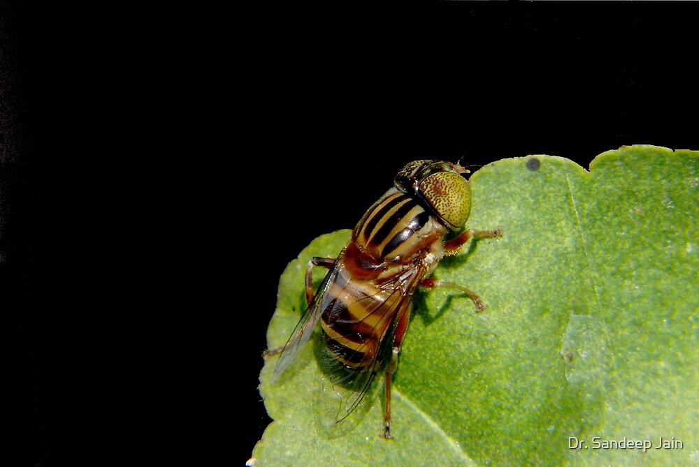 The bee by Dr. Sandeep Jain