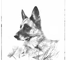 German Shepherd by mjsstolin