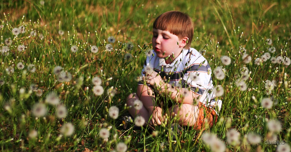 dandelions by daniels