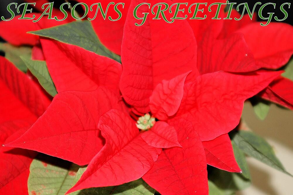 christmas card - poinsettia by CheyenneLeslie Hurst