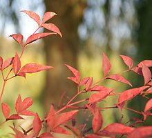 Autumnal colours by racey1876