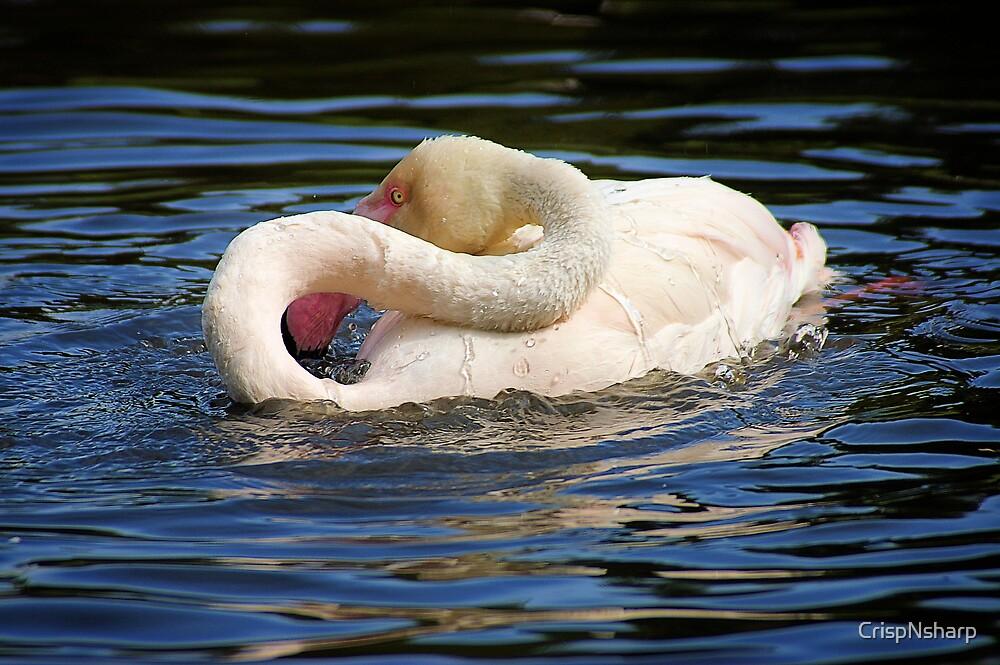 Flamingo wash by CrispNsharp