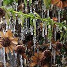 Frozen by Susan Littlefield