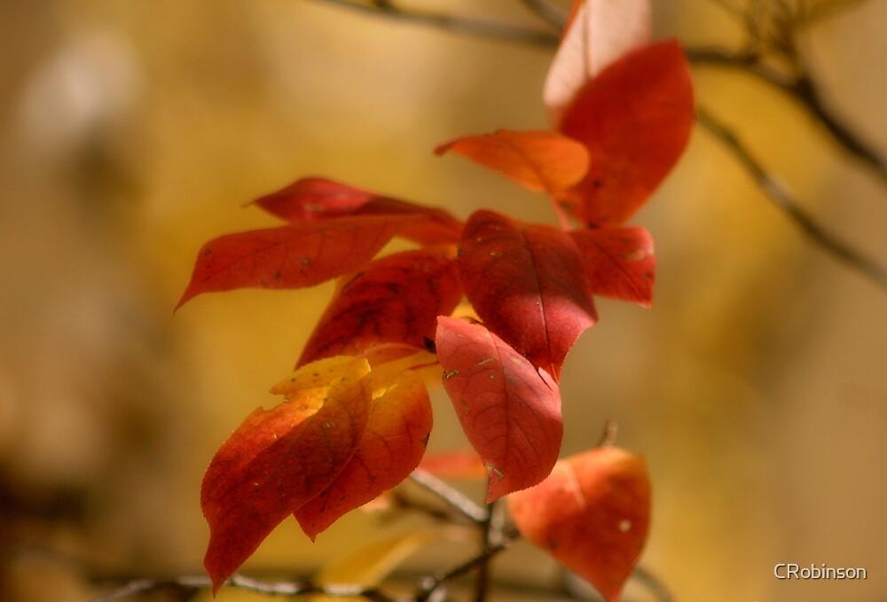 Autumn Colours by CRobinson
