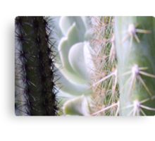 Prickly View Canvas Print