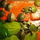 Tiny Terrapins by Jennie Smolow